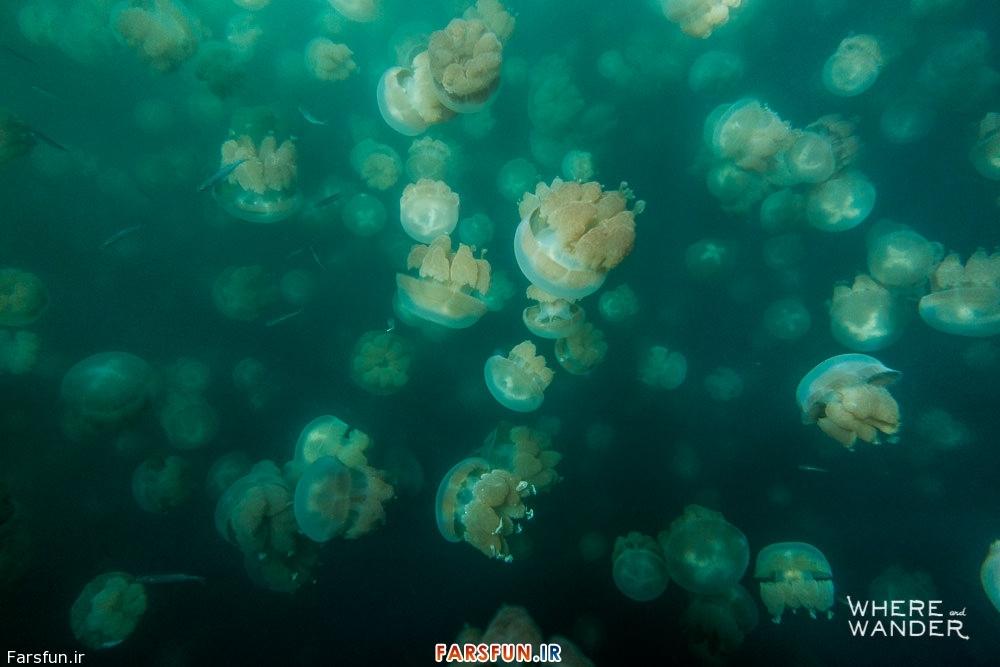 عکس سلفی با هزاران عروس دریایی