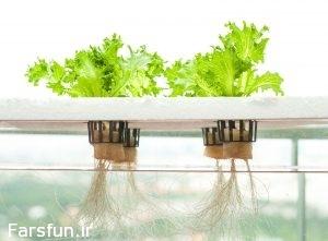 dwc-hydroponics-e1459512409966