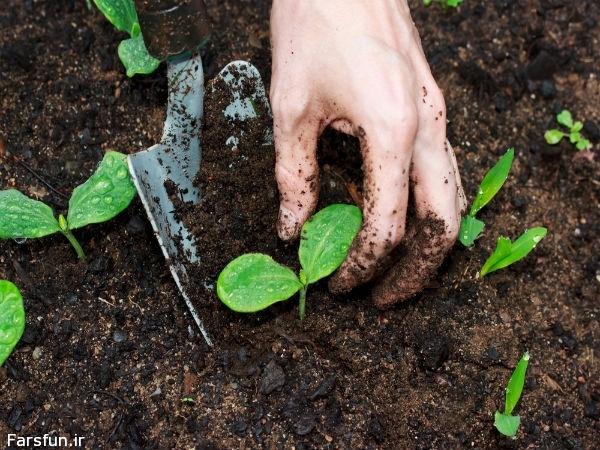 علت سفید شدن خاک گلدان