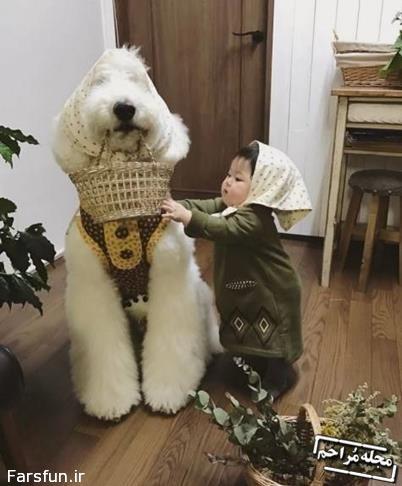 سگ پشمالو بامزه و صاحب نی نی کوچولویش